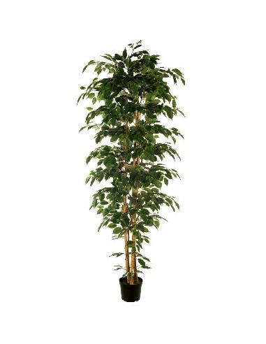 Ficus nítida artificial 2.10m