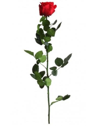 Rosa  preservada standard